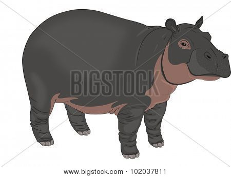Hippopotamus or Hippopotamus amphibius, Black and Brown, vector illustration