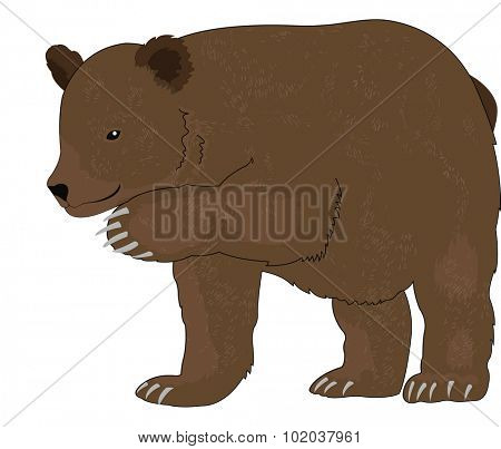 Bear or Ursus arctos, Brown, vector illustration