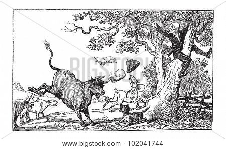 Doctor Syntax Being Chased by a Bull, by Thomas Rowlandson, vintage engraved illustration. Le Magasin Pittoresque - 1874