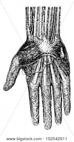 Surface layer of the hand (palmar surface), vintage engraved illustration. Usual Medicine Dictionary - Paul Labarthe - 1885.