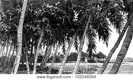 Isthmus of Panama. the river, vintage engraved illustration. Journal des Voyages, Travel Journal, (1879-80).