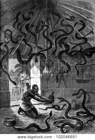 The snake charmer. Okali brought his students a black hen, vintage engraved illustration. Journal des Voyage, Travel Journal, (1880-81).