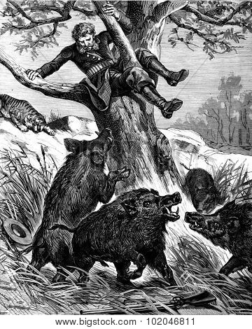 A seat in the countryside. Peccaries rushed against the throne of the tree, vintage engraved illustration. Journal des Voyages, Travel Journal, (1880-81).