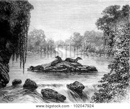 Otters busy fishing, vintage engraved illustration. Le Tour du Monde, Travel Journal, (1872).