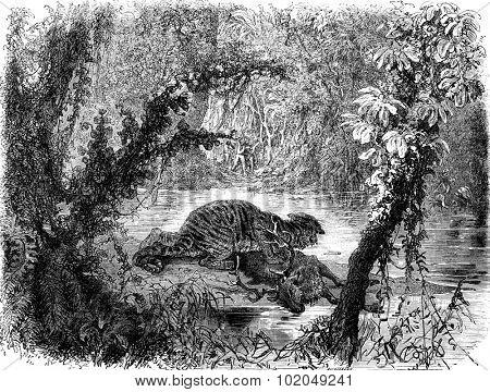 A deer chased by a tiger, vintage engraved illustration. Le Tour du Monde, Travel Journal, (1872).
