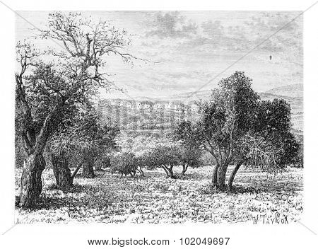 Mountainous Region of Samaria in Israel as Viewed from a Valley, vintage engraved illustration. Le Tour du Monde, Travel Journal, 1881