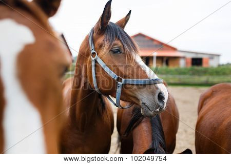 Herd Of Horses In A Stable