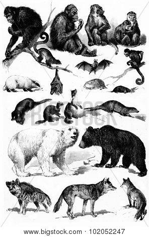 Mammals groups, vintage engraved illustration. La Vie dans la nature, 1890.