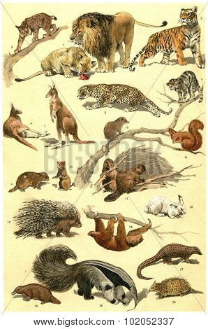 Mammals and forest animals vintage engraved illustration. From La Vie dans la nature, 1890.