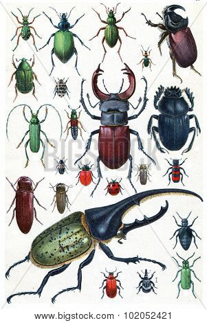 Insects, beetles and scarab, vintage engraved illustration. La Vie dans la nature, 1890.