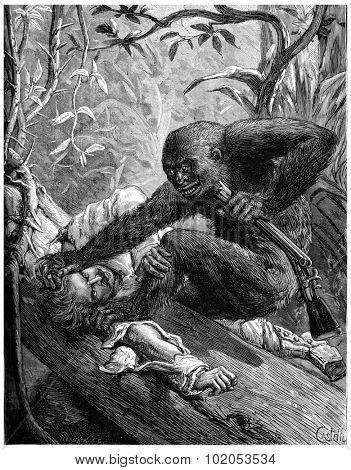 The eyes of the gorilla, bloodshot plunged into those of his Victims, vintage engraved illustration. Journal des Voyage, Travel Journal, (1880-81).