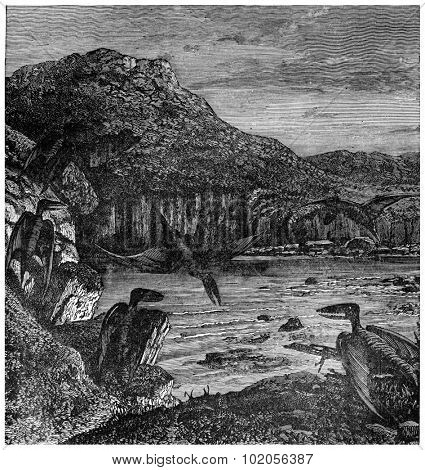 Pterodactyls, vintage engraved illustration. Earth before man  1886.