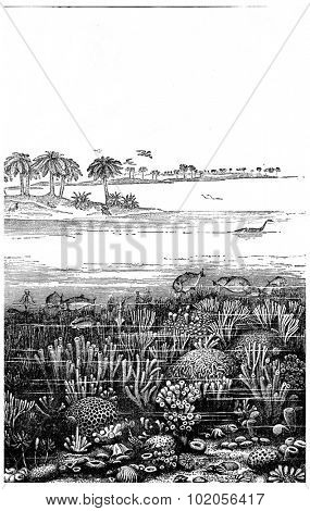 The age of the Jurassic sea at Burgundy, France, vintage engraved illustration. Earth before man  1886.