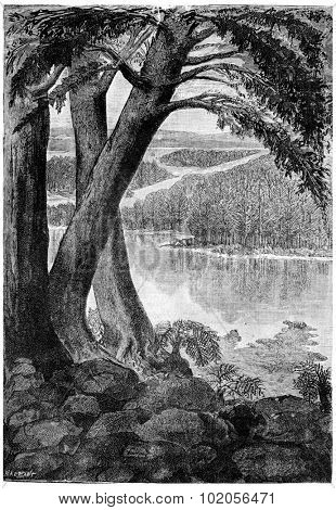Landscape of the Triassic era, vintage engraved illustration. Earth before man  1886.