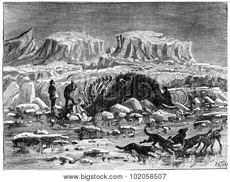 Mammoth found in the ice of Siberia, with its meat and skin, vintage engraved illustration. Earth before man  1886.