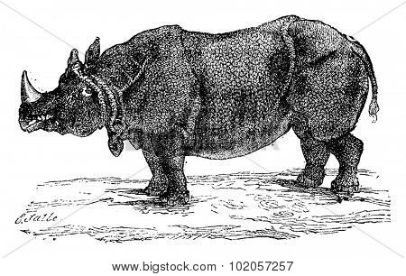 Rhinoceros or rhino, vintage engraved illustration. Natural History of Animals, 1880.