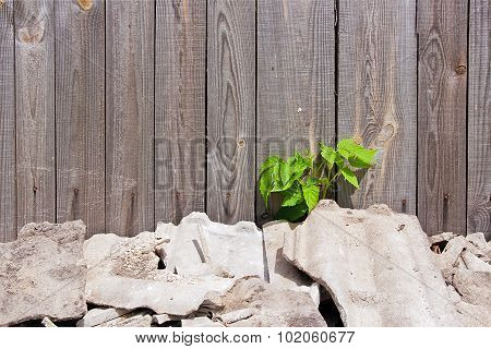Green Leaves Of The Raspberries On Natural Wooden Background.