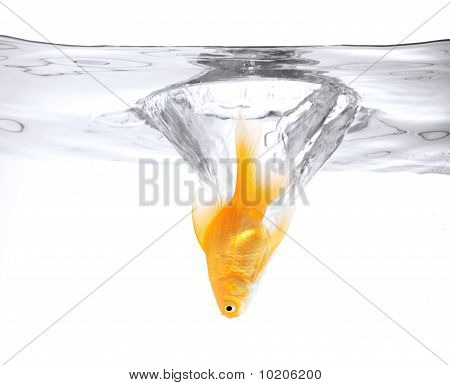 Goldfish Jumping Into The Water