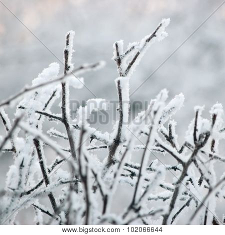 Snowy Frosty Tree Branches, Twigs, Large Detailed Hoarfrost Macro Closeup, Gentle Bokeh Detail White