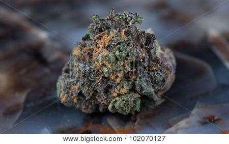 Grandaddy Purple Medicinal Medical Marijuana