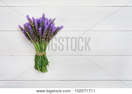 Bundle Of Lavender