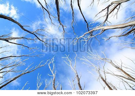 Sky background with trees