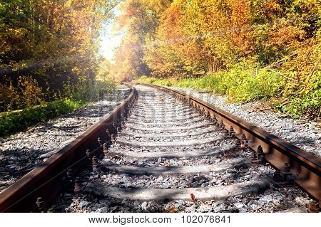 Rusty railroad in autumn forest