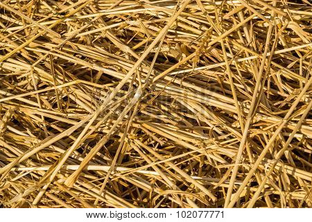 Fresh Loose Thatch Straw Material