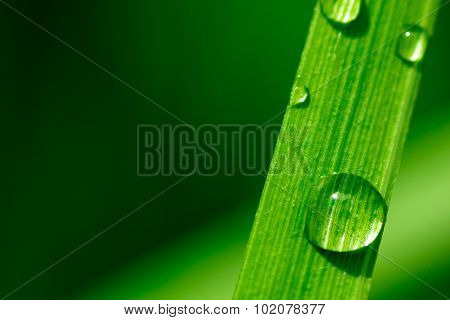 Macro Image Of Water Drops On A Plant Leaf