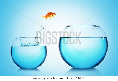 Goldfish jumping from glass aquarium,on blue background