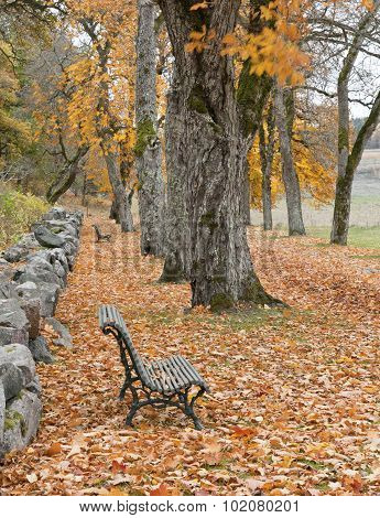Long seats in a garden parkway, trees and stone wall.