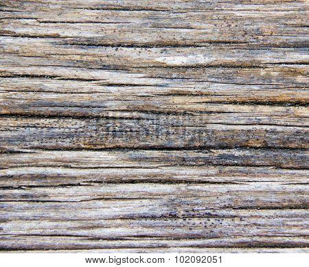 Rotten wood