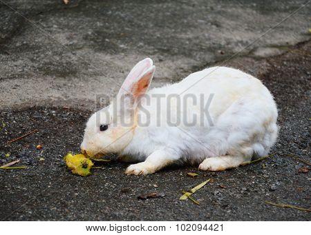 rabbit eating fruit on the ground