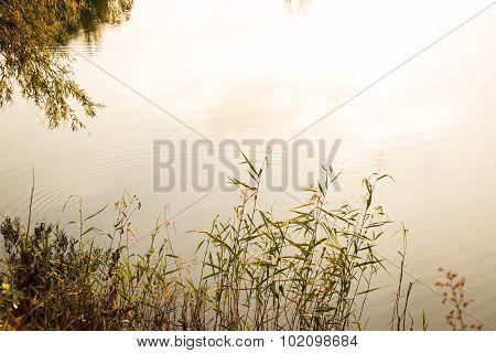 Cane Grass Water