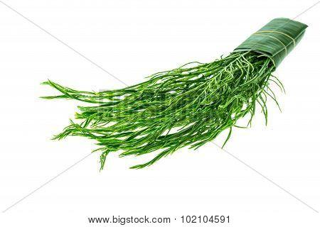 Green Thai Senegalia Pennata Isolated On White Background