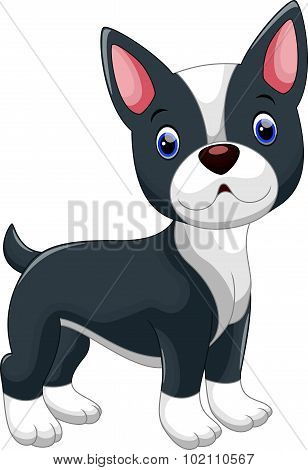 Cute Boston Terrier cartoon