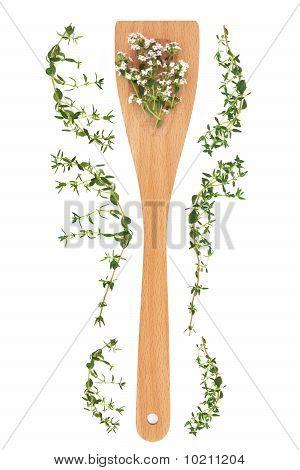 Thyme Herb