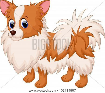 Cute chihuahua dog cartoon