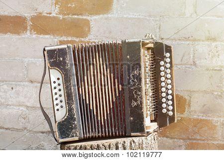 accordion on the stump