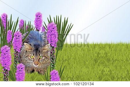 Cat in Flower Garden