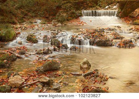 Golden Creek In Fall Woods Nature Environment