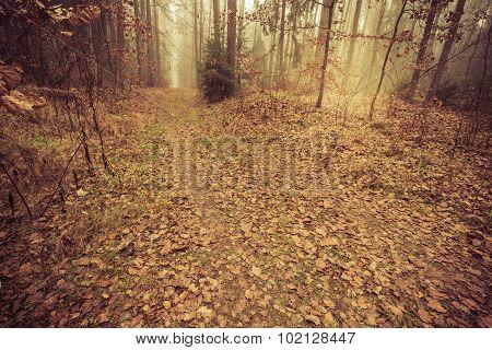 Pathway Through The Misty Autumn Forest