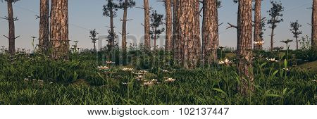 conifer forest panorama