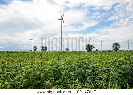 Wind Turbine In Cassava Plantation