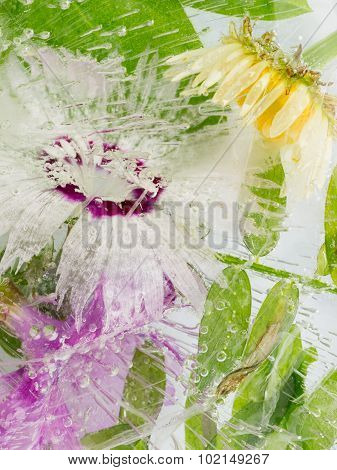 Frozen Abstraction Of A Carnation Flower