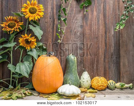 Composition of pumpkins, zucchini,summer squashes, against rustic wooden plank wall