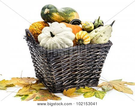 Wicker basket full of summer squashes and pumpkins over white background