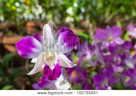 orchid flower under sunlight