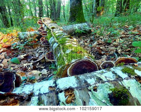 Cut logs in the woods