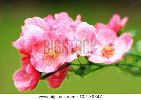 Tiny Bouquet Of Pink Roses